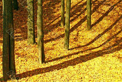 Mellow autumn.