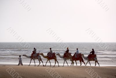 Camel train silhouette