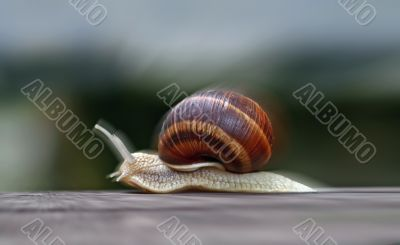 speeding snail