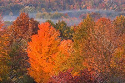 Autumn Foliage and Fog