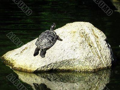 Turtle Inspirations