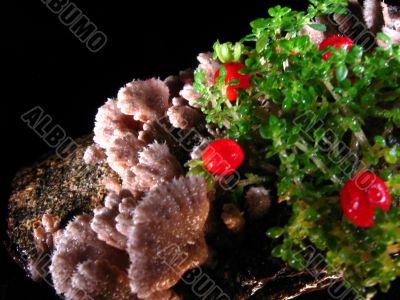 mushrooms-berries&leafs