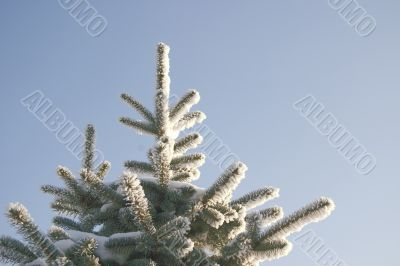 A part of snow tree under the blue sky background