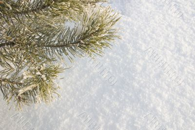 A part of snow tree under the white snow background
