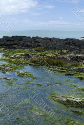 Irish bay