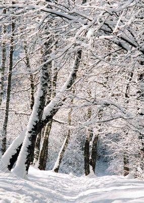 Winter fairy tale.