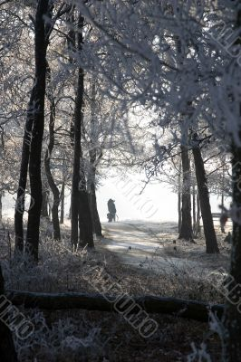 Two people between snowcovered trees