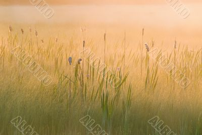 Sunrise Seney Wildlife Refuge