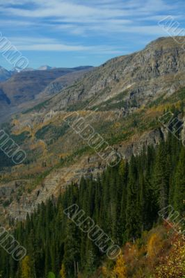 Spruce forest on steep mountain ridge