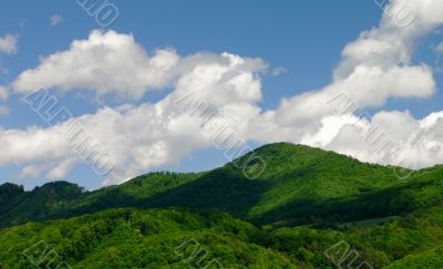 Mountain landscape with forest and sky