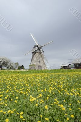 windmill in a dandelion field