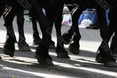 Horse team, hooves & fetlocks