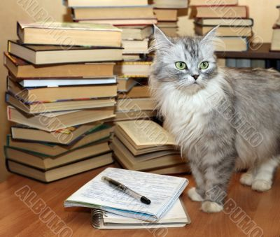 Many old books and cat