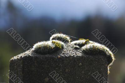 Moss on stone pole