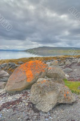 Red algae on large boulders in Iceland
