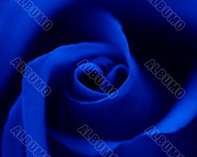 Blue rose with heart symbol in center. Close-up