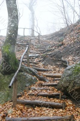 wooden stairs in rainy forest