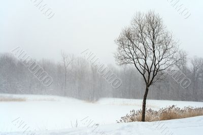 Tree in misty haze of winter blizzard