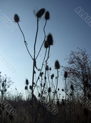 Spiky Plants at Dusk