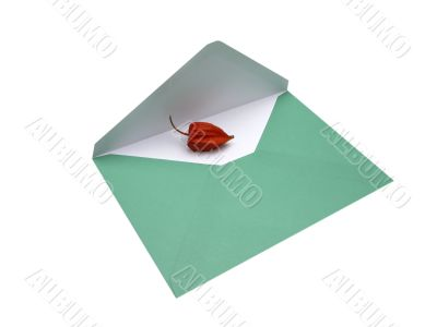 envelope and physalis