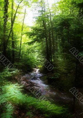 Brook in the forest