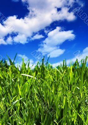 Fields of summer - vertical