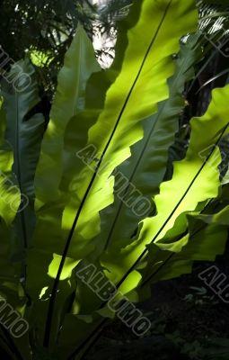 Green warmth