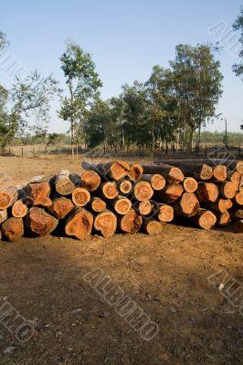 Logs, India