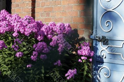 Brick wall and door