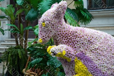flower kangaroo