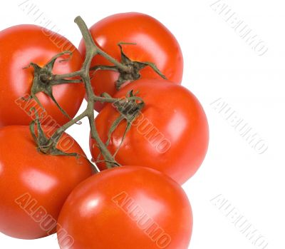 The Spanish tomatoes
