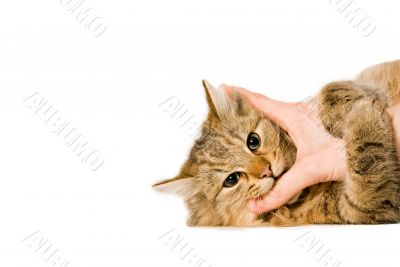 Young cat is hugging the hand