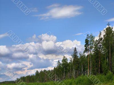 forest skyline