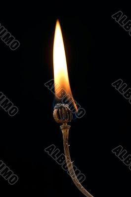 burning poppyhead