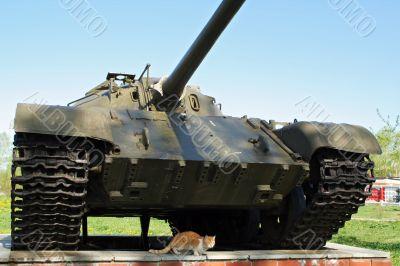 defenceless cat