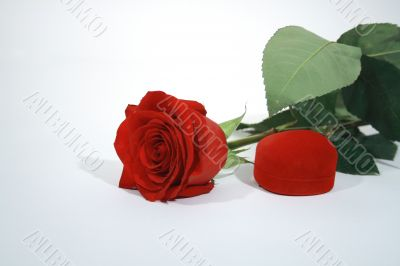 Red rose and present