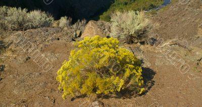 Desert trees and basalt cliffs and talus