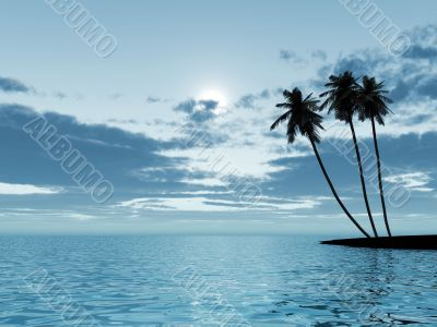 palm trees in a moonlight