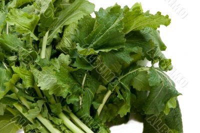 Nutritious Turnip Greens