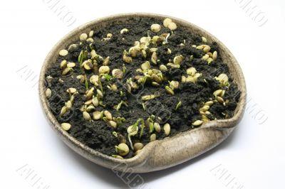 Bowl with lentil