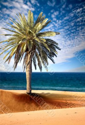 beautiful beach view with palm tree