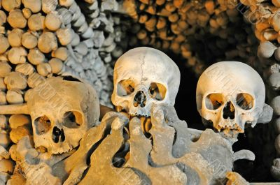 human sculls, bones and skeletons