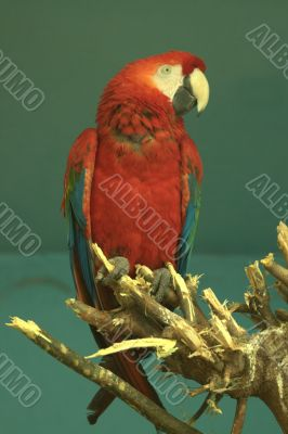 Multi-coloured parrot sitting on a branch