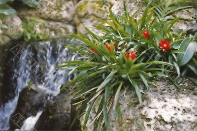 Red flowers growing out of rock
