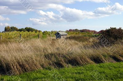 Connecticut vineyard