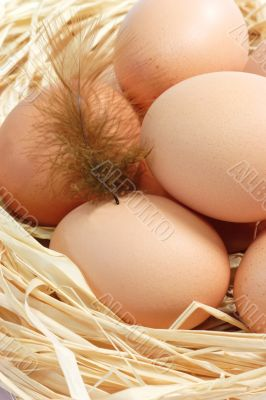Brown Eggs with Feather