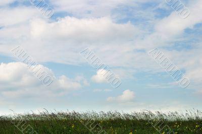 Land in summer