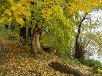 An autumn stillness