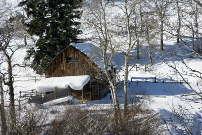 Old western barn in snow with aspens