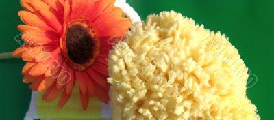 gerbera and bath sponge